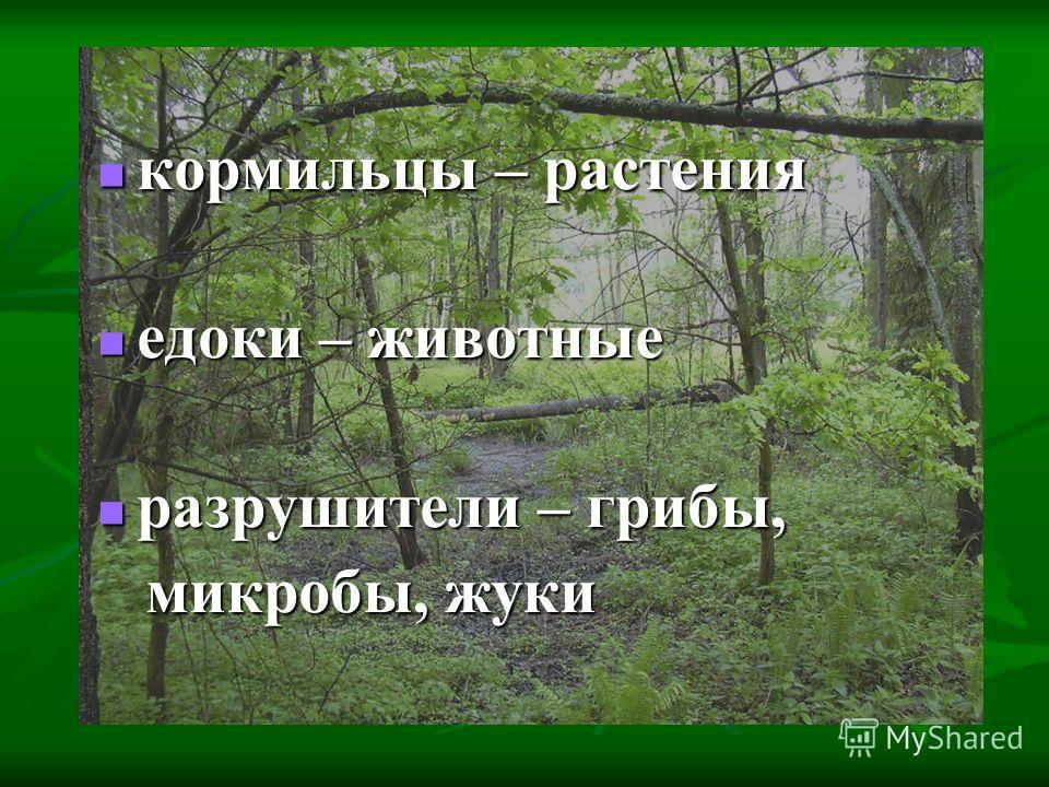 кормильцы – растения кормильцы – растения едоки – животные едоки – животные разрушители – грибы, разрушители – грибы, микробы, жуки микробы, жуки