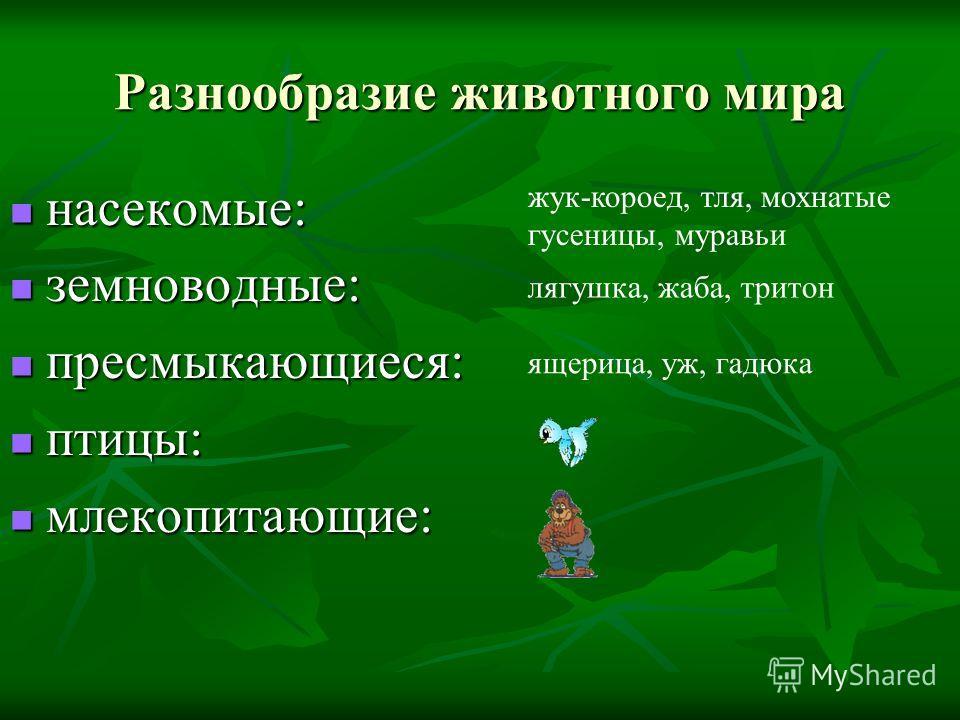 Разнообразие животного мира насекомые: насекомые: земноводные: земноводные: пресмыкающиеся: пресмыкающиеся: птицы: птицы: млекопитающие: млекопитающие: жук-короед, тля, мохнатые гусеницы, муравьи лягушка, жаба, тритон ящерица, уж, гадюка