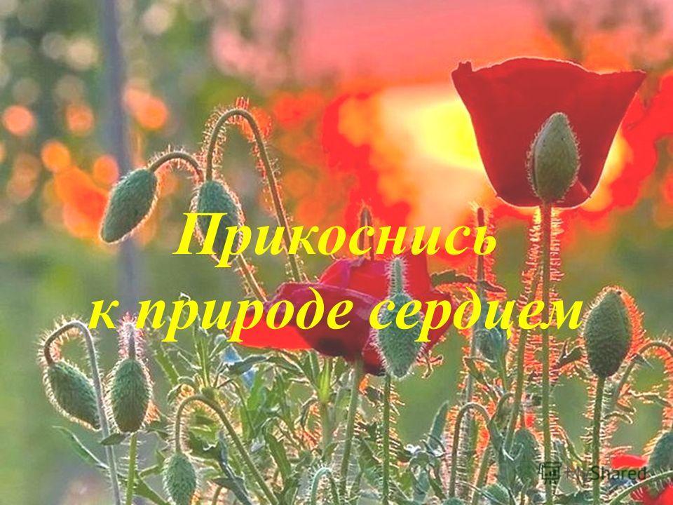 Прикоснись к природе сердцем