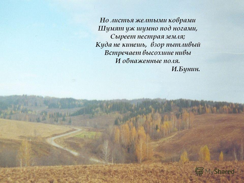 Но листья желтыми коврами Шумят уж шумно под ногами, Сыреет пестрая земля; Куда не кинешь, взор пытливый Встречает высохшие нивы И обнаженные поля. И.Бунин.