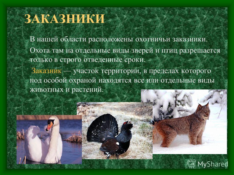 ЗАКАЗНИКИ В нашей области расположены охотничьи заказники. Охота там на отдельные виды зверей и птиц разрешается только в строго отведенные сроки. Заказник участок территории, в пределах которого под особой охраной находятся все или отдельные виды жи