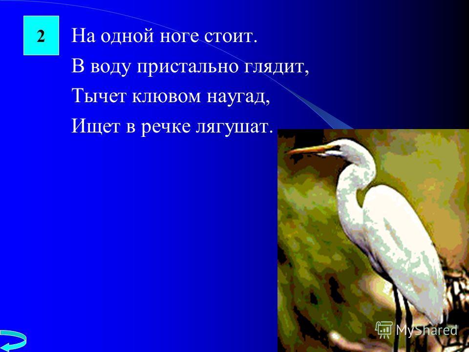 На одной ноге стоит. В воду пристально глядит, Тычет клювом наугад, Ищет в речке лягушат. 2