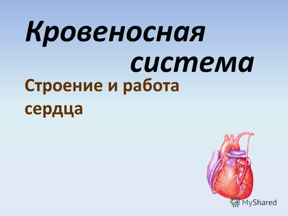 Кровеносная система Строение и работа сердца