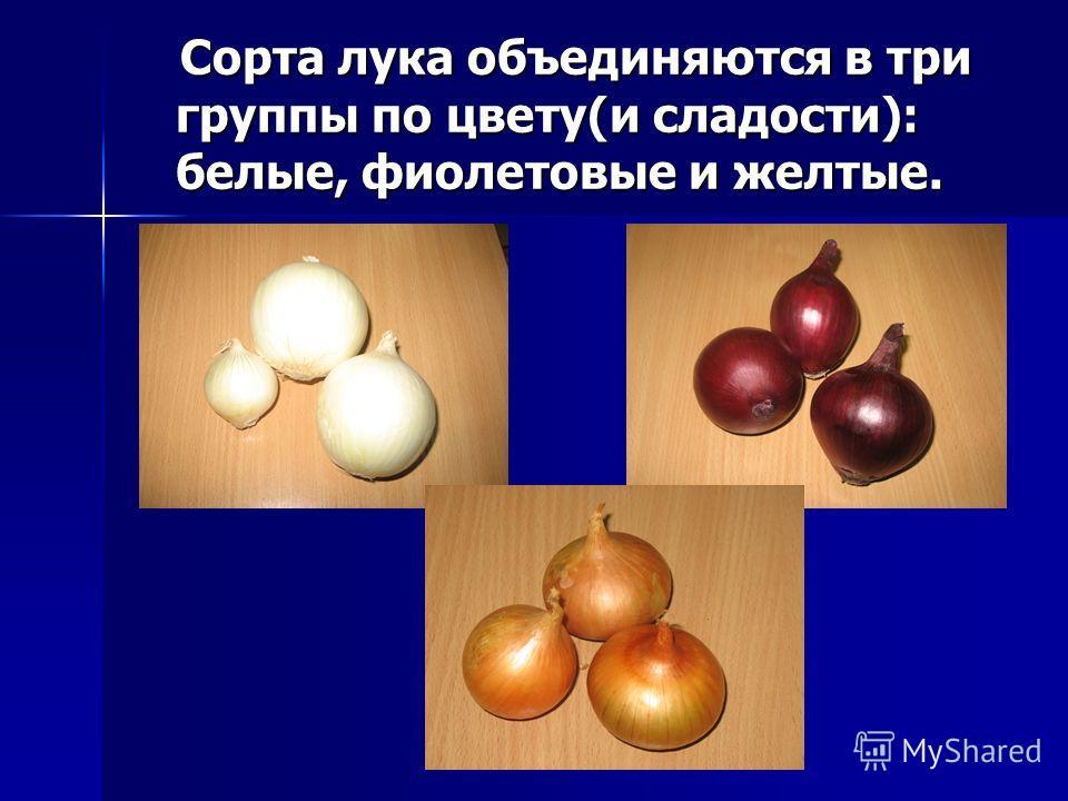 Сорта лука объединяются в три группы по цвету(и сладости): белые, фиолетовые и желтые. Сорта лука объединяются в три группы по цвету(и сладости): белые, фиолетовые и желтые.