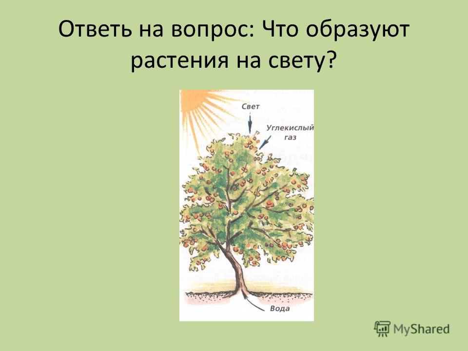 Ответь на вопрос: Что образуют растения на свету?