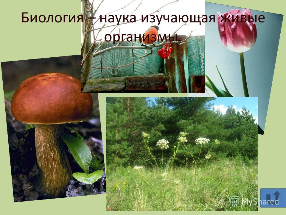 Биология – наука изучающая живые организмы.