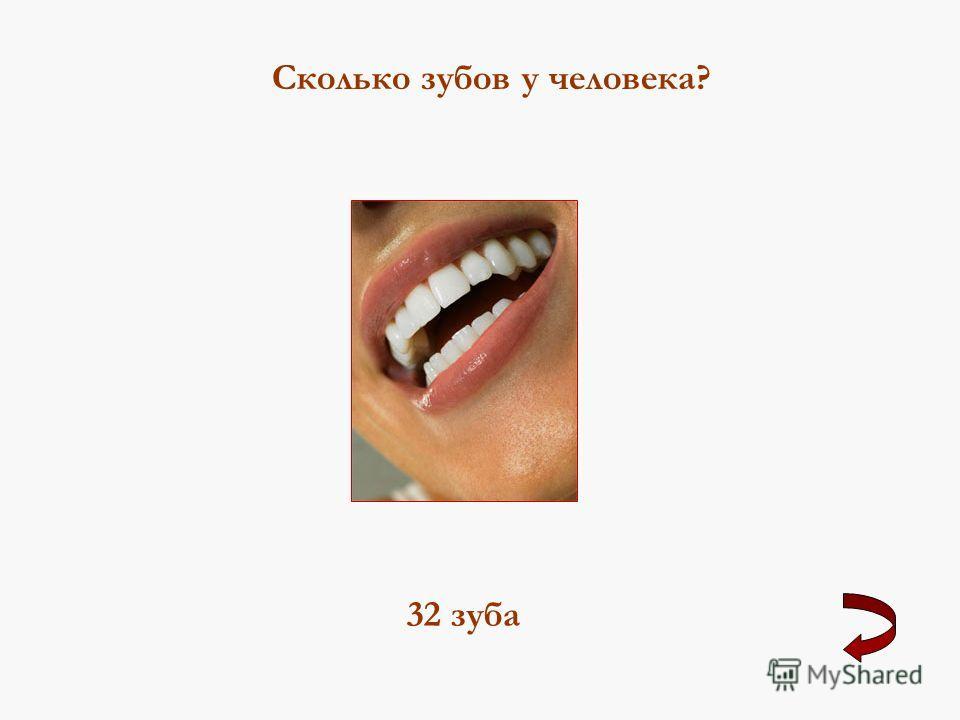 Сколько зубов у человека? 32 зуба