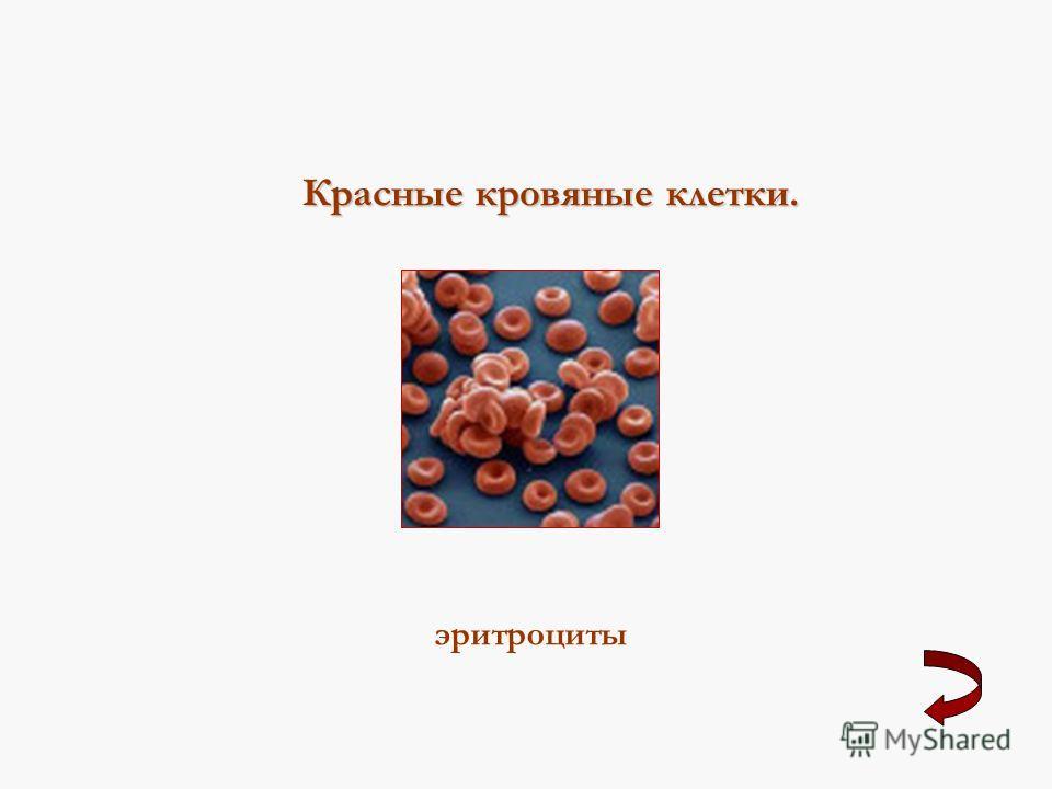 Красные кровяные клетки. эритроциты