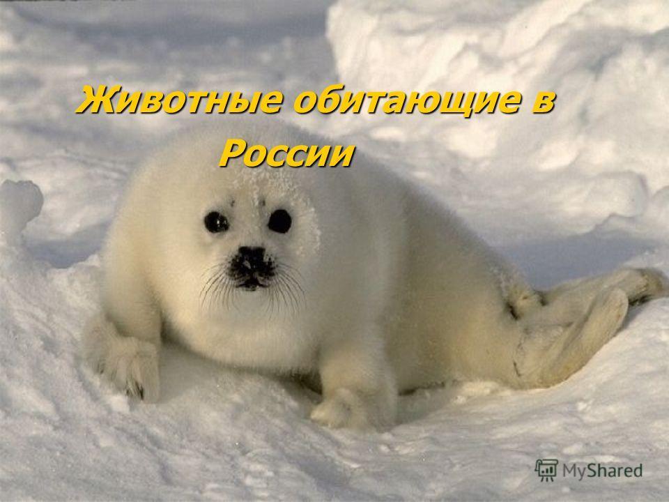 Животные обитающие в Животные обитающие в России России