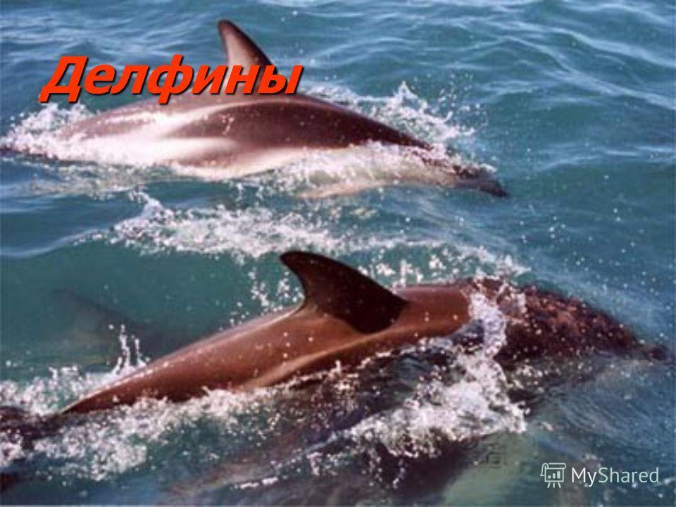 Делфины