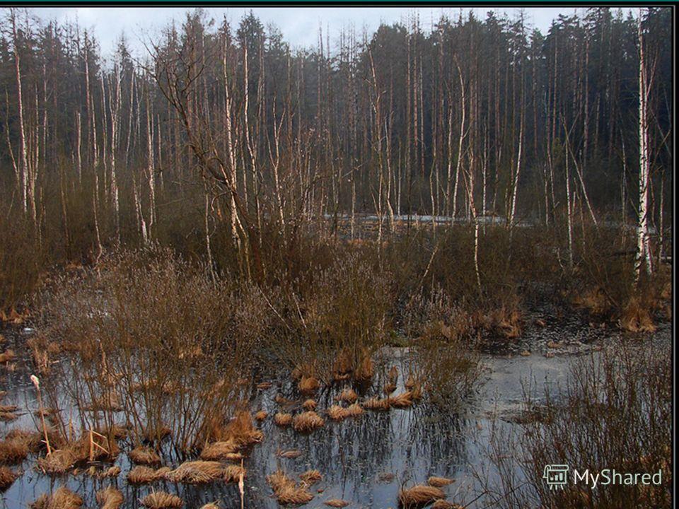 Деревню окружают многочисленные болота. Болота покрыты густым травостоем: осока, рогоз, пушица, водный перец. По краям болото зарастает ивой.