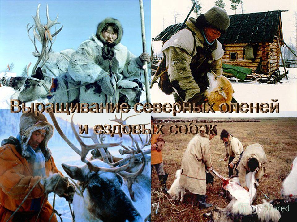 Животноводство – это выращивание домашних животных для получения продуктов питания и материалов для промышленности. Среди сельскохозяйственных животных есть звери, птицы, рыбы, насекомые.