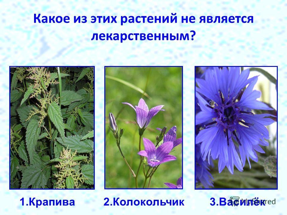 Какое из этих растений не является лекарственным? 1.Крапива2.Колокольчик 3.Василёк