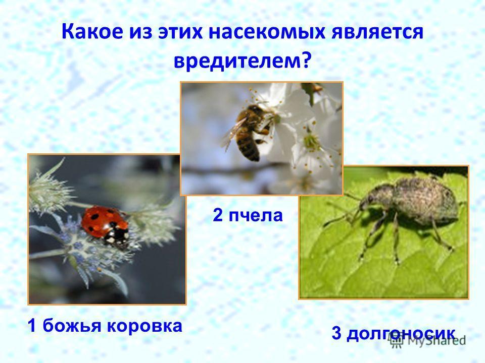 Какое из этих насекомых является вредителем? 1 божья коровка 2 пчела 3 долгоносик