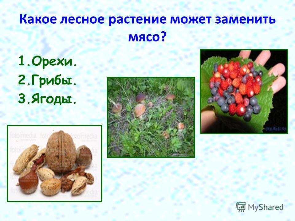 Какое лесное растение может заменить мясо? 1.Орехи. 2.Грибы. 3.Ягоды.
