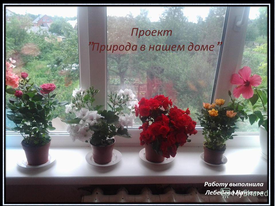 Проект Природа в нашем доме Работу выполнила Лебедева Наталья