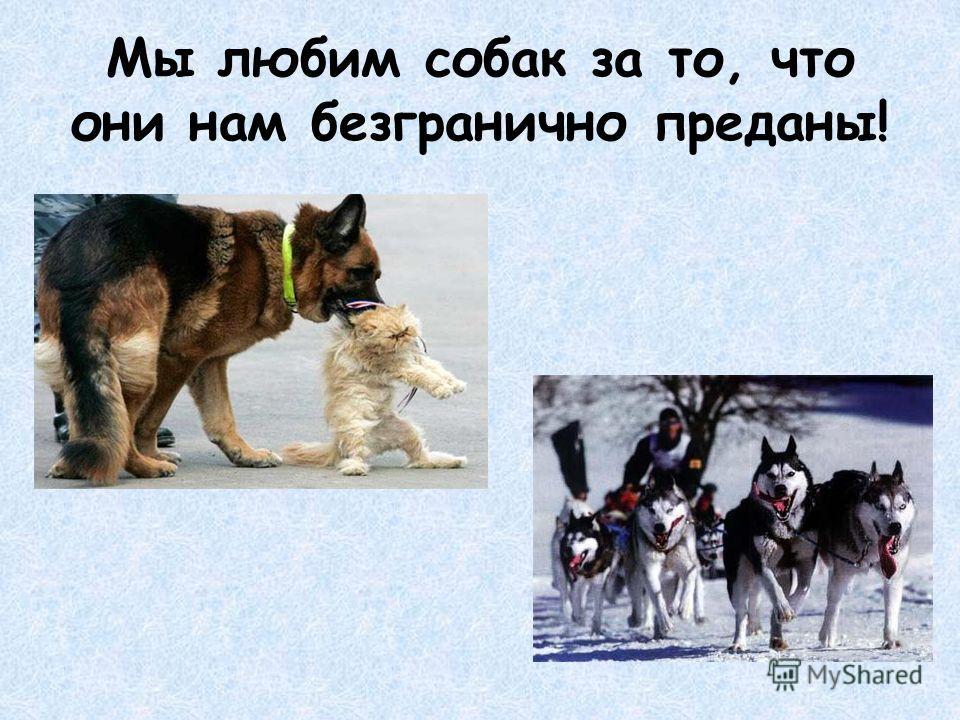Мы любим собак за то, что они нам безгранично преданы!