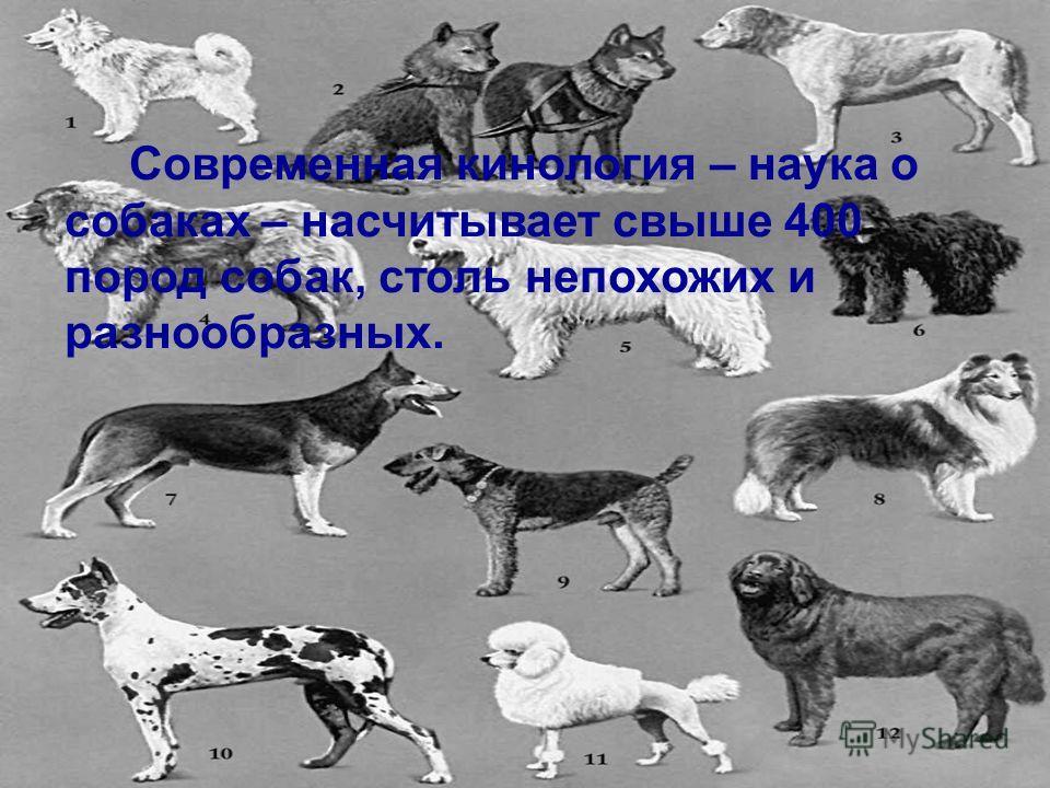 Современная кинология – наука о собаках – насчитывает свыше 400 пород собак, столь непохожих и разнообразных.