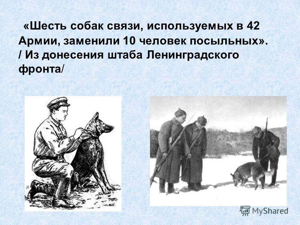 «Шесть собак связи, используемых в 42 Армии, заменили 10 человек посыльных». / Из донесения штаба Ленинградского фронта/