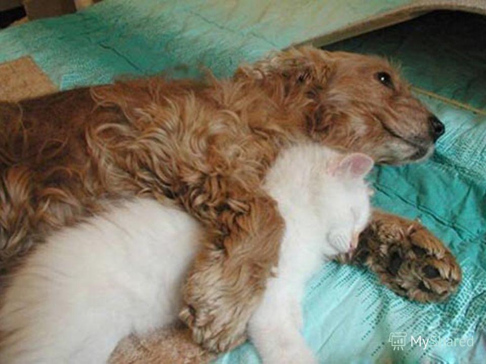 А теперь давайте посмотрим видеоролик о дружбе животных и порадуемся за тех кто умеет дружить.