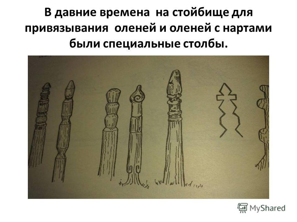 В давние времена на стойбище для привязывания оленей и оленей с нартами были специальные столбы.