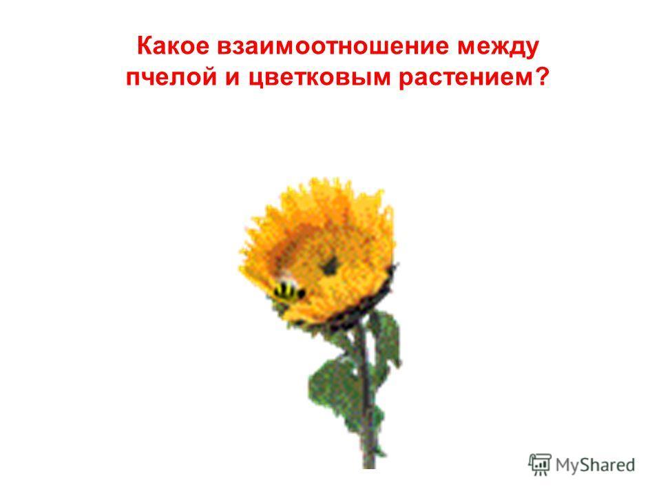 Какое взаимоотношение между пчелой и цветковым растением?