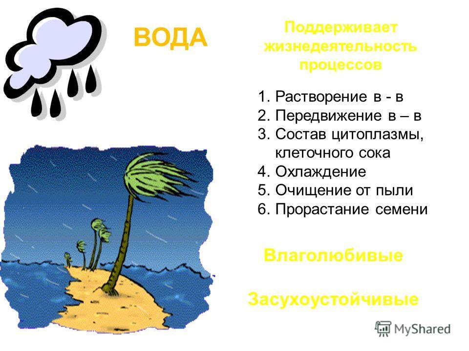 ВОДА Поддерживает жизнедеятельность процессов 1.Растворение в - в 2.Передвижение в – в 3.Состав цитоплазмы, клеточного сока 4.Охлаждение 5.Очищение от пыли 6.Прорастание семени Влаголюбивые Засухоустойчивые