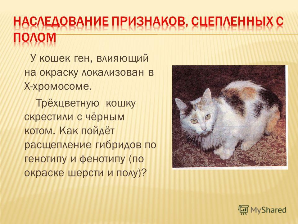 У кошек ген, влияющий на окраску локализован в Х-хромосоме. Трёхцветную кошку скрестили с чёрным котом. Как пойдёт расщепление гибридов по генотипу и фенотипу (по окраске шерсти и полу)?