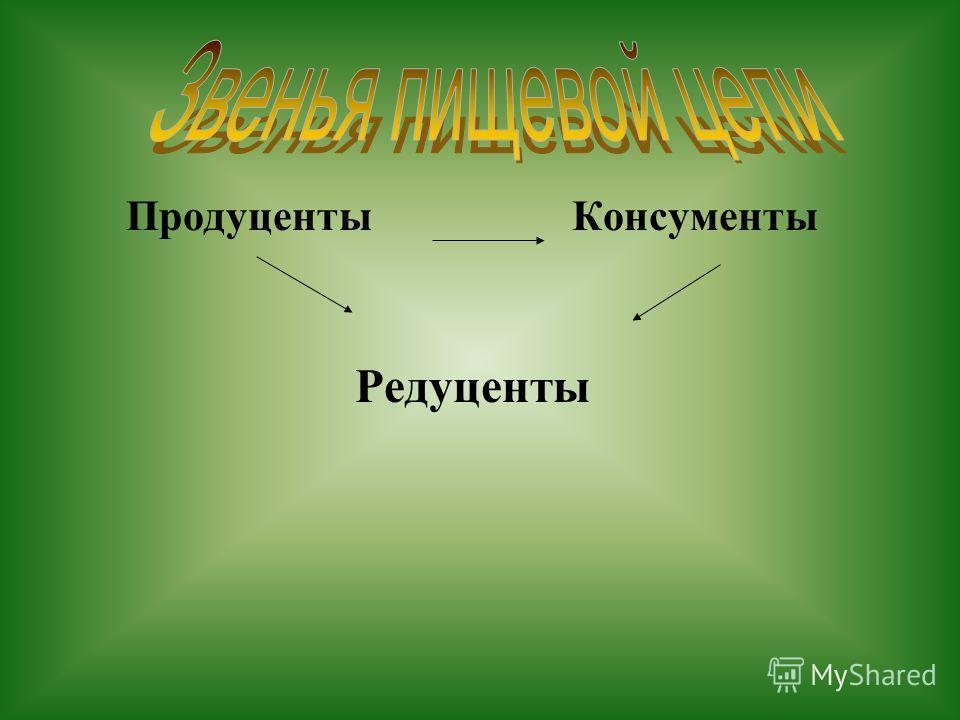Продуценты Консументы Редуценты