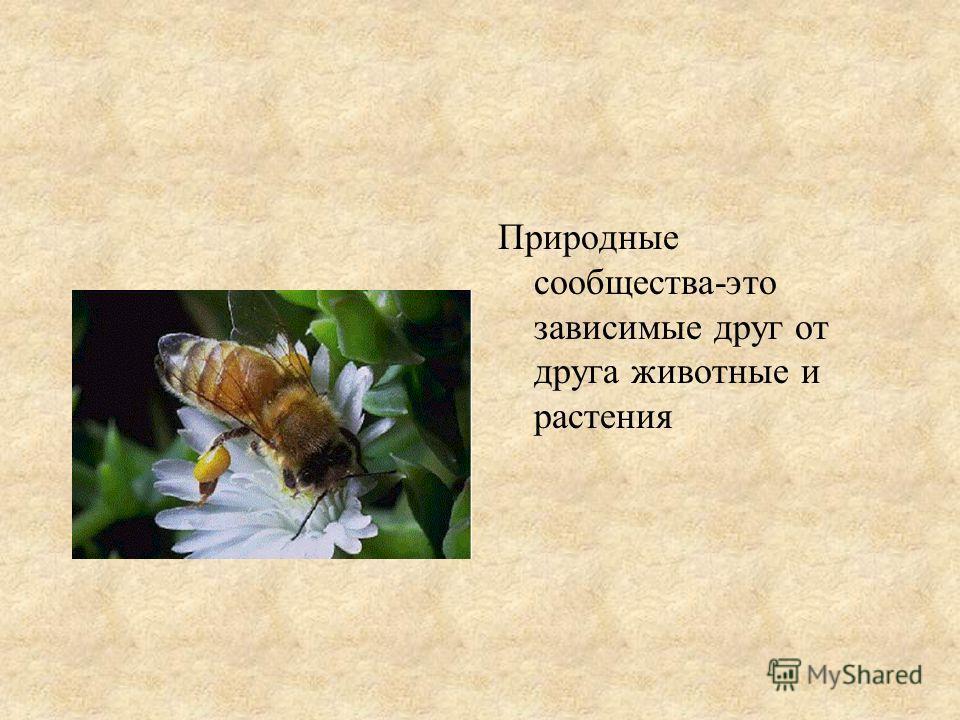 Природные сообщества-это зависимые друг от друга животные и растения
