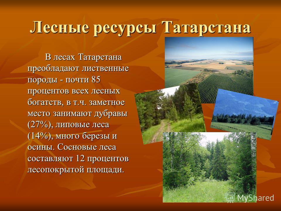 Лесные ресурсы Татарстана В лесах Татарстана преобладают лиственные породы - почти 85 процентов всех лесных богатств, в т.ч. заметное место занимают дубравы (27%), липовые леса (14%), много березы и осины. Сосновые леса составляют 12 процентов лесопо