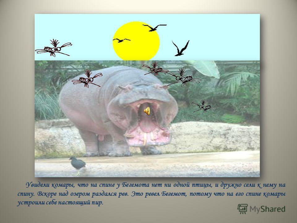 Увидели комары, что на спине у Бегемота нет ни одной птицы, и дружно сели к нему на спину. Вскоре над озером раздался рев. Это ревел Бегемот, потому что на его спине комары устроили себе настоящий пир.