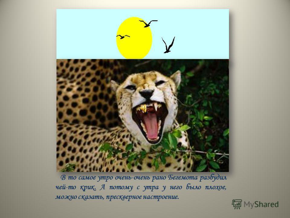 В то самое утро очень-очень рано Бегемота разбудил чей-то крик. А потому с утра у него было плохое, можно сказать, прескверное настроение.