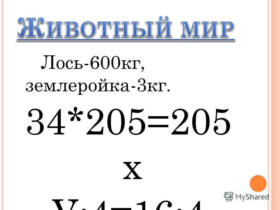 Лось-600кг, землеройка-3кг. 34*205=205 х У:4=16:4