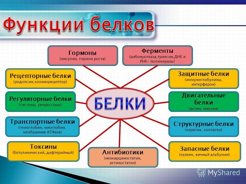Защитные белки (иммуноглобулины, интерферон) Ферменты (рибонуклеаза,трипсин,ДНК и РНК- полимеразы) Запасные белки (казеин, яичный альбумин) Двигательные белки (актин, миозин) Структурные белки (кератин, коллаген) Гормоны (инсулин, гормон роста) Рецеп