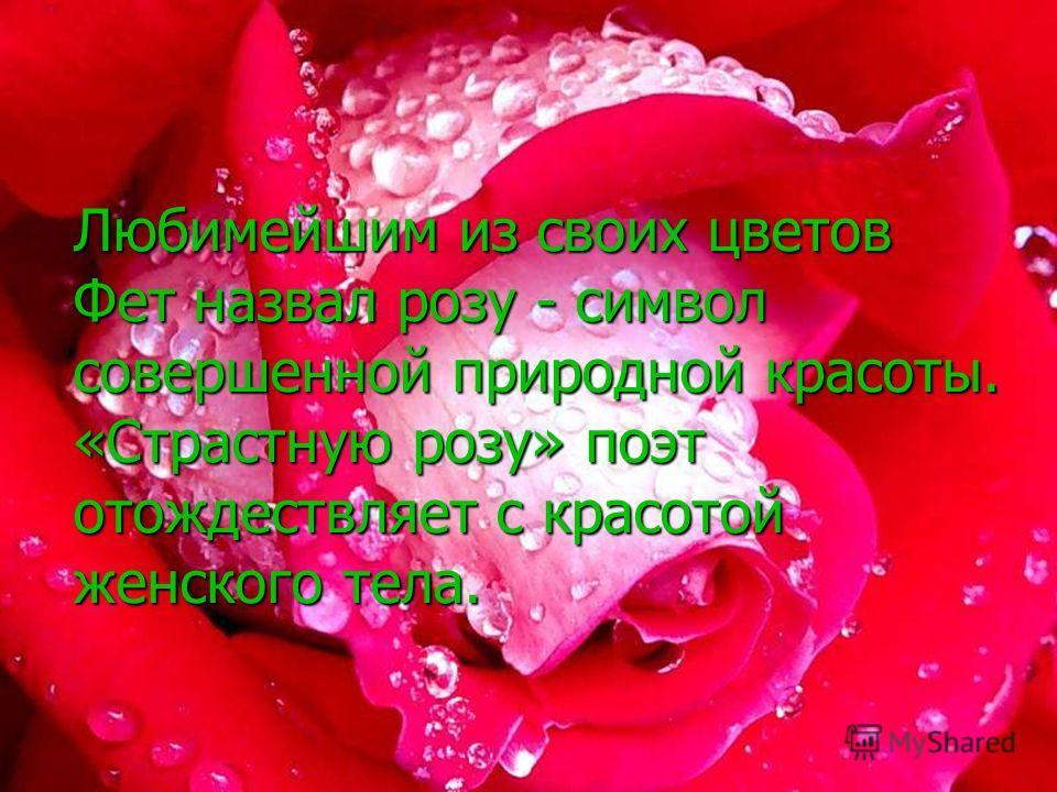 Любимейшим из своих цветов Фет назвал розу - символ совершенной природной красоты. «Страстную розу» поэт отождествляет с красотой женского тела.