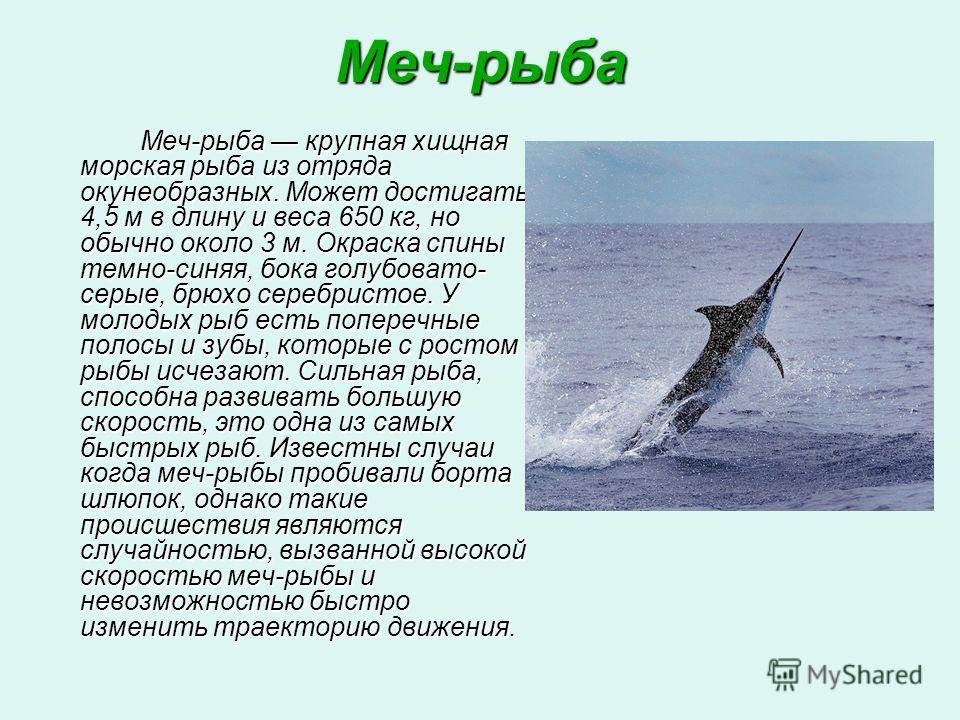 Меч-рыба Меч-рыба крупная хищная морская рыба из отряда окунеобразных. Может достигать 4,5 м в длину и веса 650 кг, но обычно около 3 м. Окраска спины темно-синяя, бока голубовато- серые, брюхо серебристое. У молодых рыб есть поперечные полосы и зубы