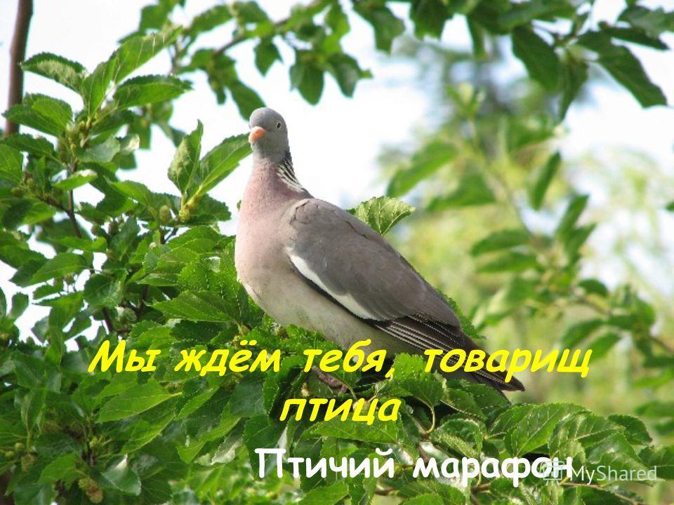 Голоса Птиц Зимой Скачать