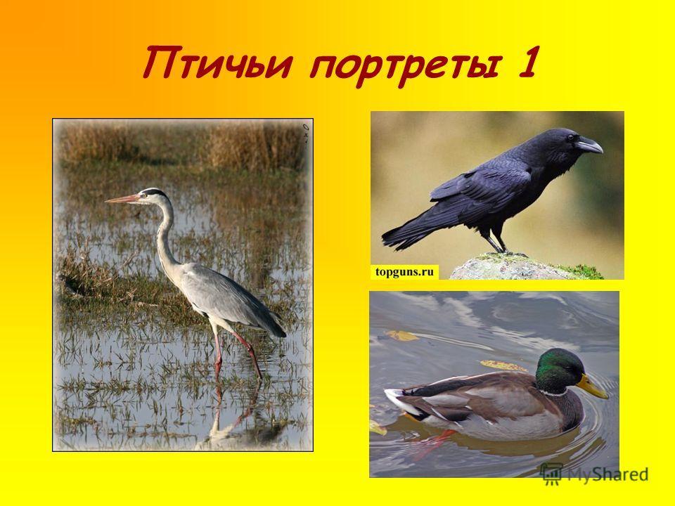 Птичьи портреты 1