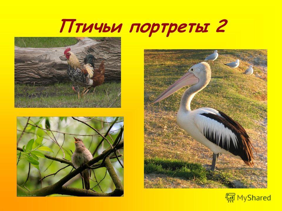 Птичьи портреты 2