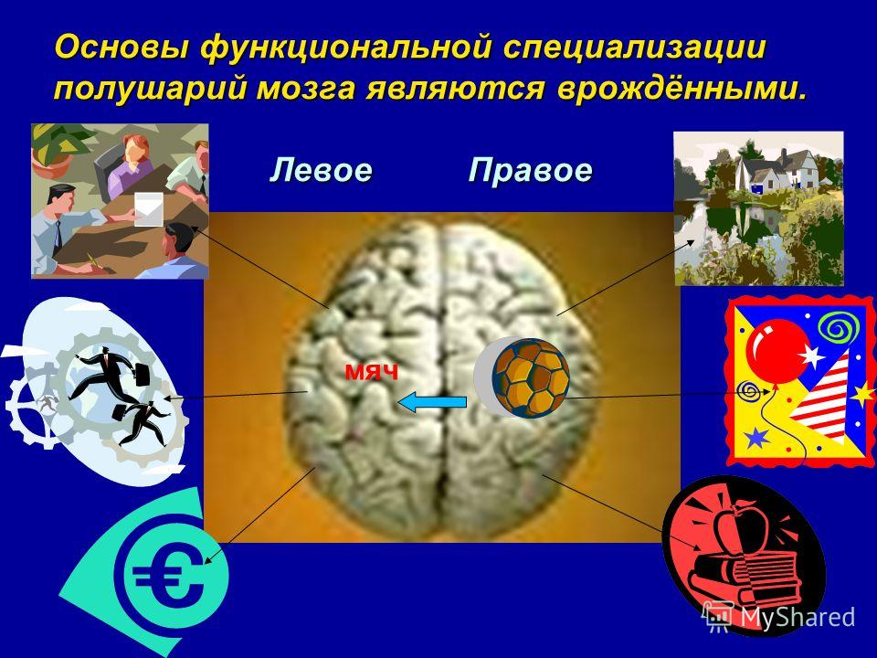 Основы функциональной специализации полушарий мозга являются врождёнными. Левое Правое мяч