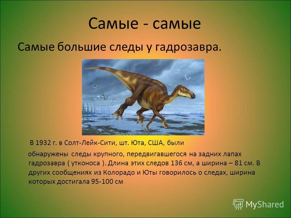 Самые - самые Самые большие следы у гадрозавра. В 1932 г. в Солт-Лейк-Сити, шт. Юта, США, были обнаружены следы крупного, передвигавшегося на задних лапах гадрозавра ( утконоса ). Длина этих следов 136 см, а ширина – 81 см. В других сообщениях из Кол