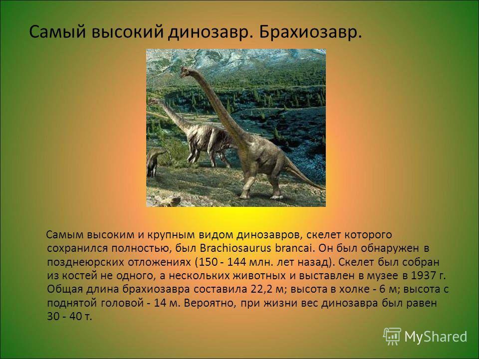 Самый высокий динозавр. Брахиозавр. Самым высоким и крупным видом динозавров, скелет которого сохранился полностью, был Brachiosaurus brancai. Он был обнаружен в позднеюрских отложениях (150 - 144 млн. лет назад). Скелет был собран из костей не одног
