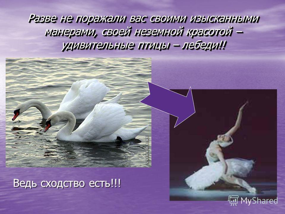 Разве не поражали вас своими изысканными манерами, своей неземной красотой – удивительные птицы – лебеди!! Ведь сходство есть!!!