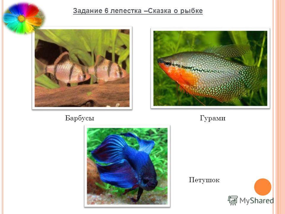 Задание 6 лепестка –Сказка о рыбке Барбусы Петушок Гурами