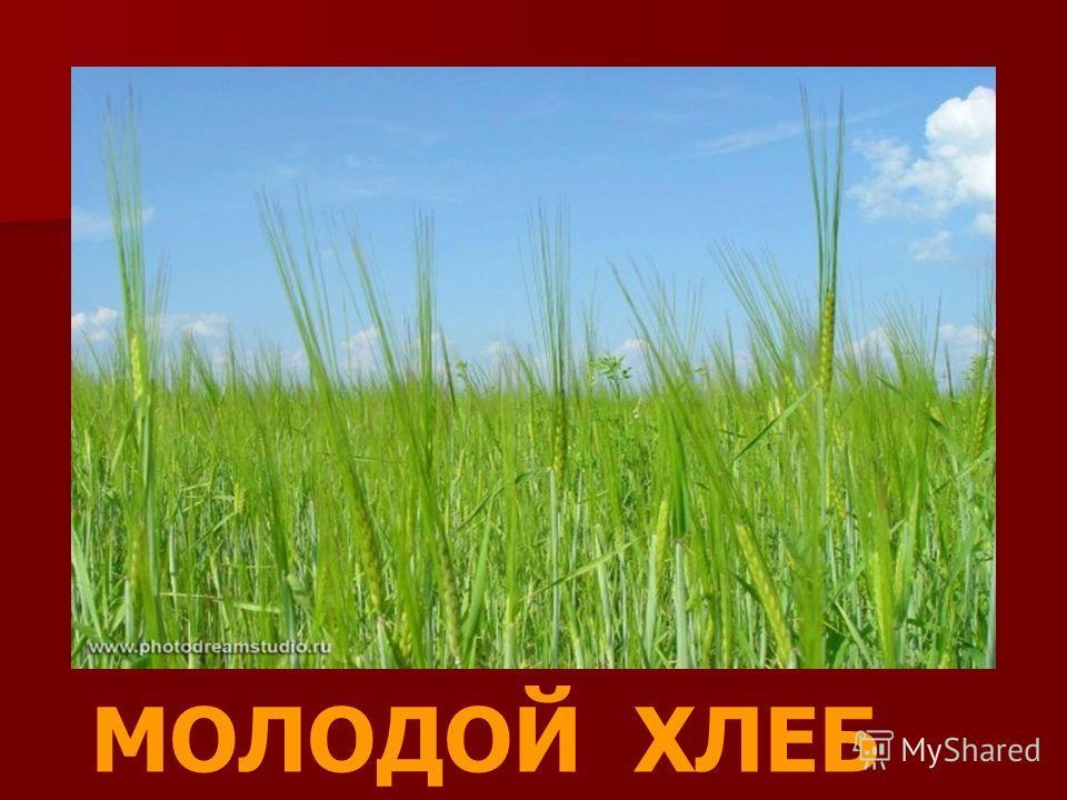 МОЛОДОЙ ХЛЕБ