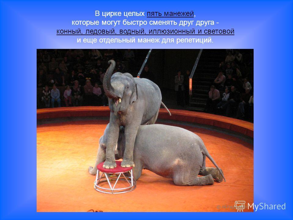 В цирке целых пять манежей, которые могут быстро сменять друг друга - конный, ледовый, водный, иллюзионный и световой и еще отдельный манеж для репетиций.