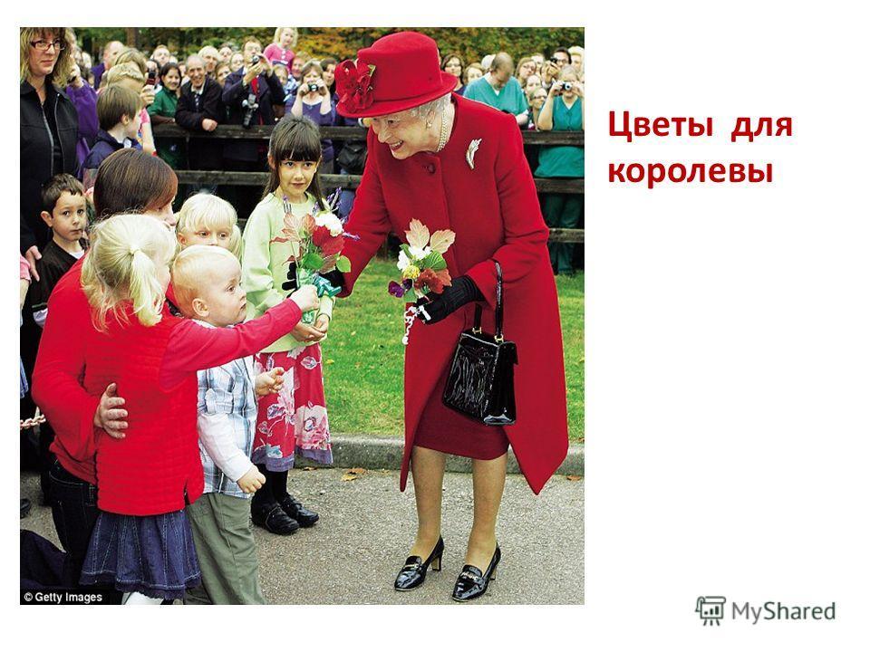 Цветы для королевы