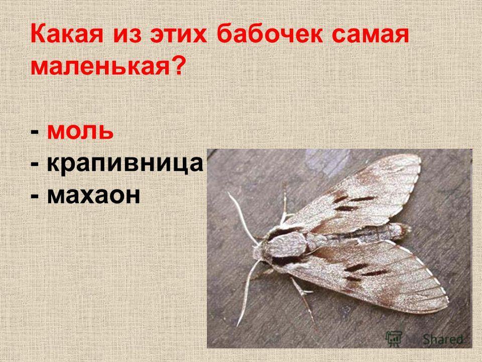 Какая из этих бабочек самая маленькая? - моль - крапивница - махаон