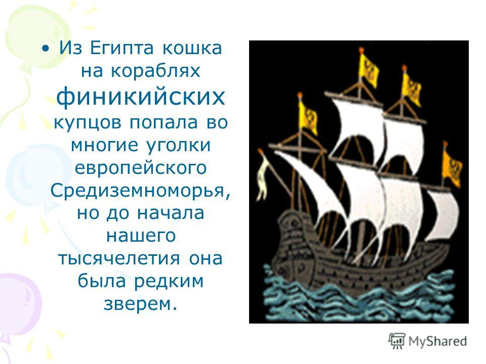 Из Египта кошка на кораблях финикийских купцов попала во многие уголки европейского Средиземноморья, но до начала нашего тысячелетия она была редким зверем.